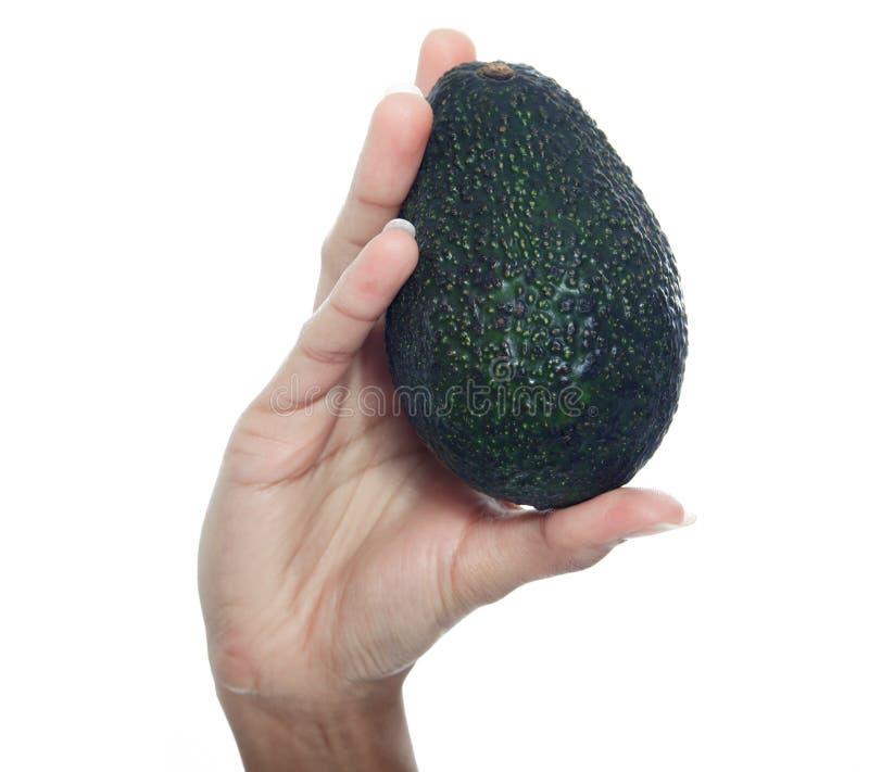 Ręki mienia avocado w pracownianym białym tle zdjęcie royalty free