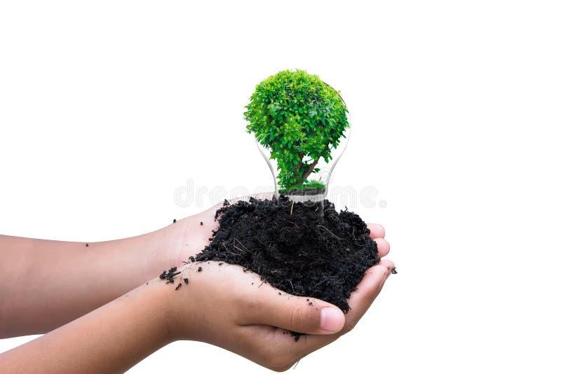 Ręki mienia glebowa i łamana żarówka z małą rośliną inside zdjęcie stock