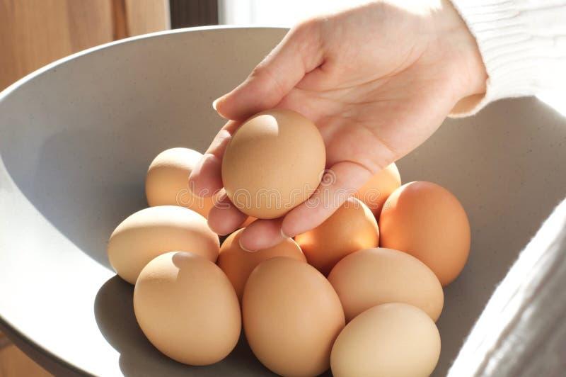 Ręki mienia jajko obraz royalty free