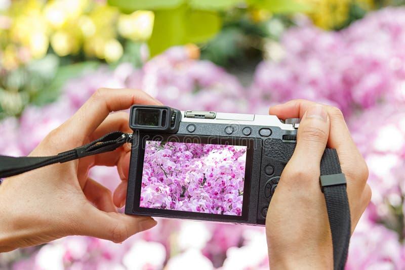 Ręki mienia kamera bierze fotografię orchidee kwitnie obrazy stock