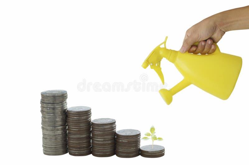 Ręki mienia podlewania żółta puszka z stosem pieniądze monety i mały drzewo odizolowywający na białym tle, pojęcie w skrytce, kon obrazy royalty free