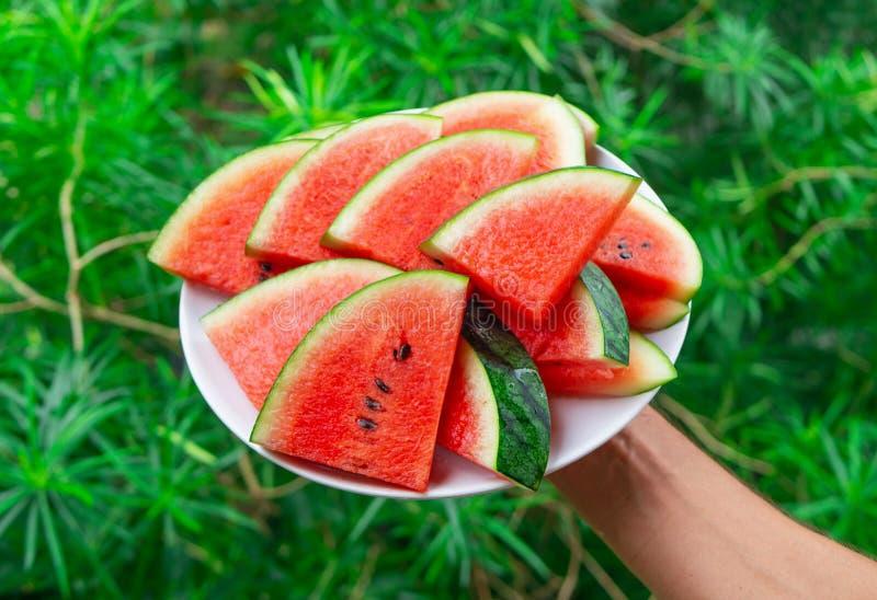 Ręki mienia talerz z dojrzałymi arbuza trójboka plasterkami na zielonym tle zdjęcie stock