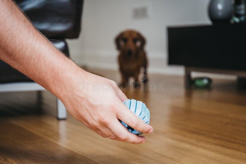Ręki mienia zabawki piłka, sylwetka pies na tle zdjęcia royalty free