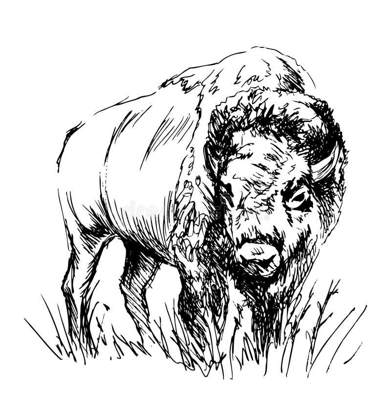Ręki nakreślenia żubr ilustracja wektor