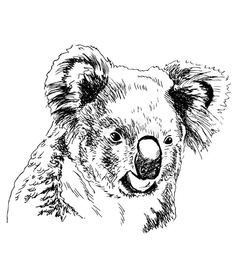 Ręki nakreślenia głowy koala ilustracja wektor