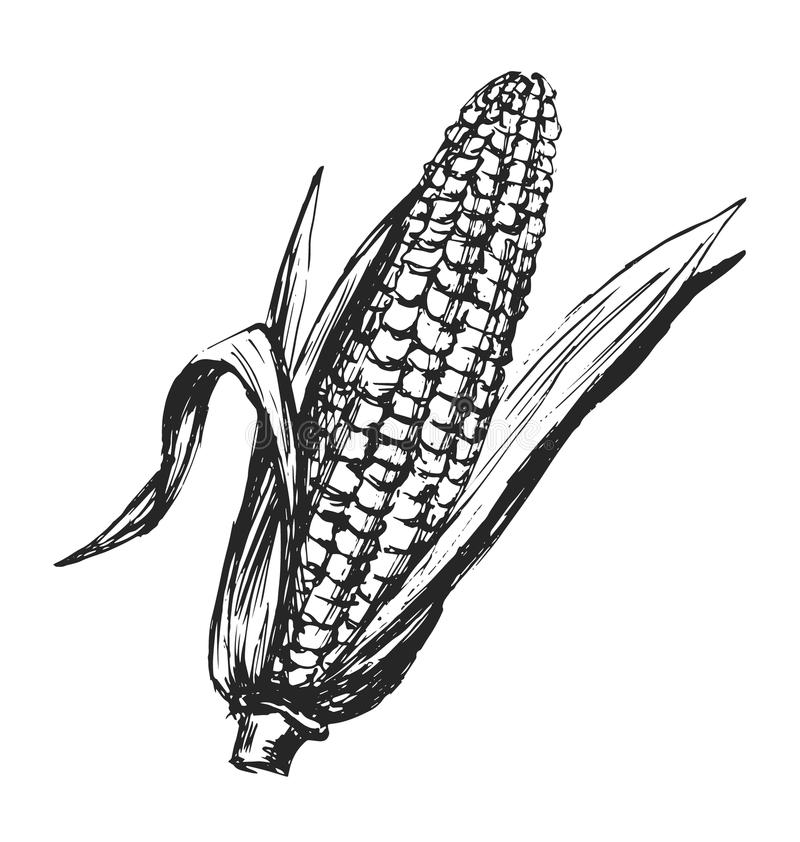 Ręki nakreślenia kukurudza ilustracji