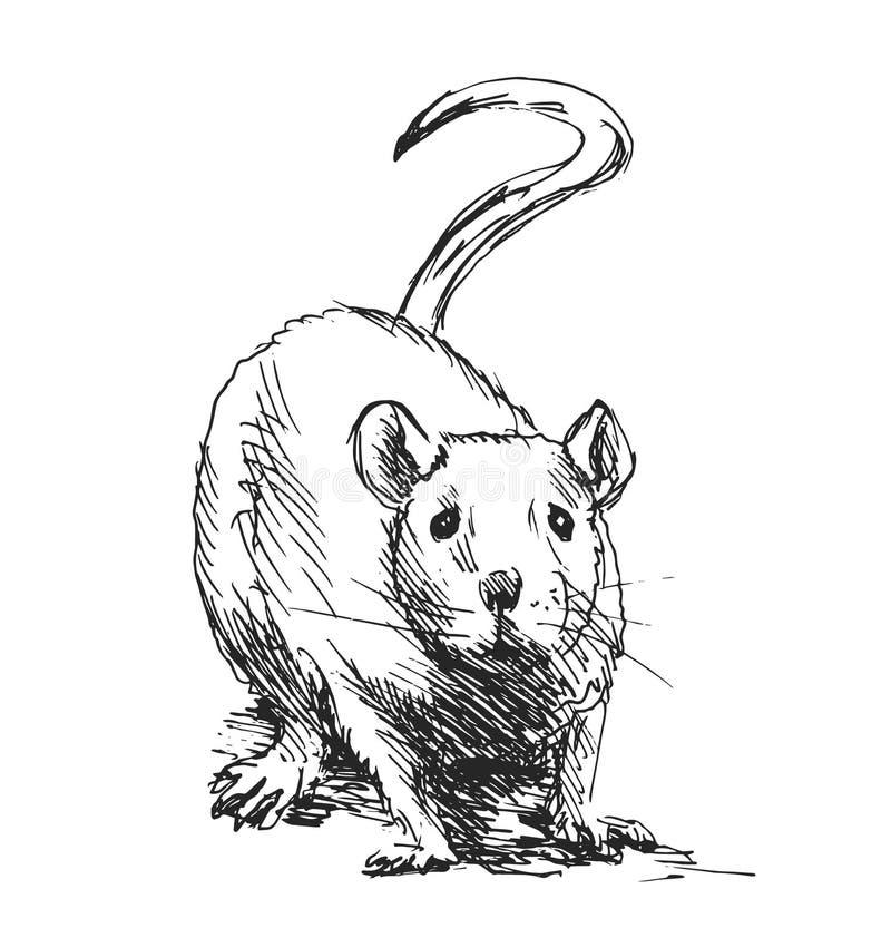 Ręki nakreślenia szczur ilustracji