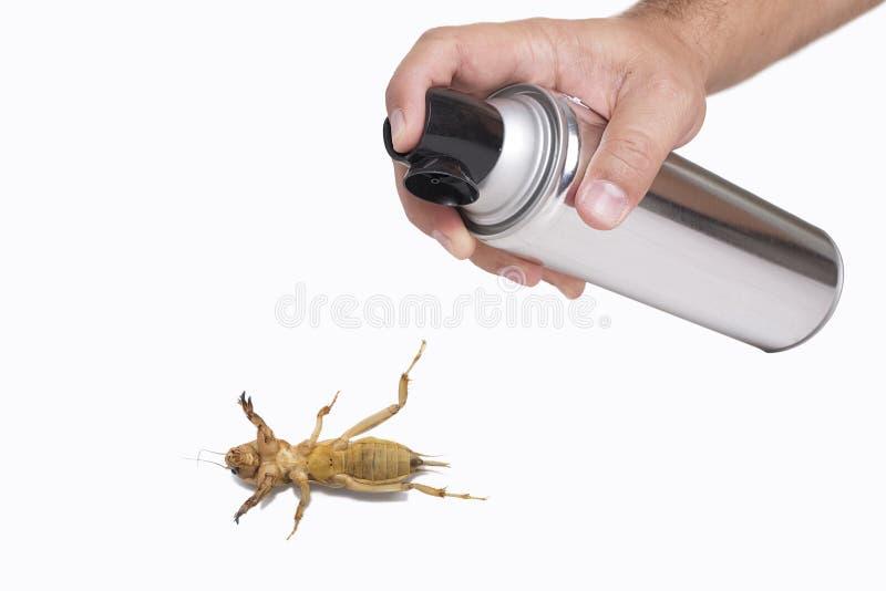Ręki opryskiwania pestycyd obraz stock