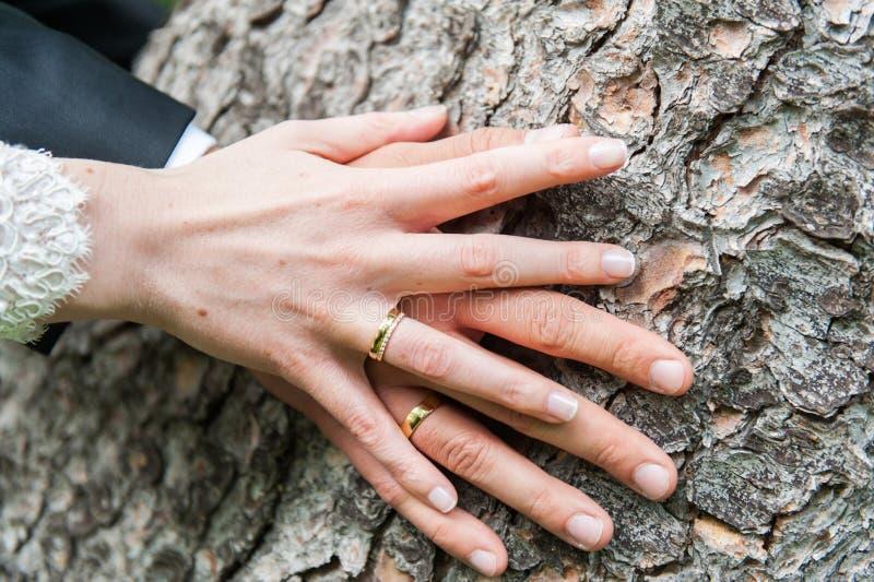 Ręki państwo młodzi na drzewnym bagażniku zdjęcia royalty free