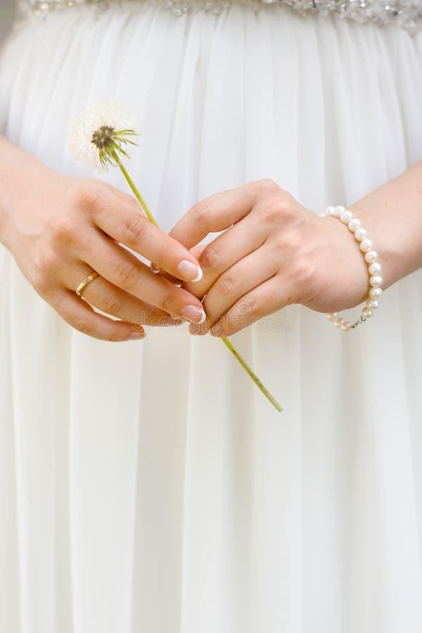 Ręki panna młoda z dandelion zdjęcia royalty free