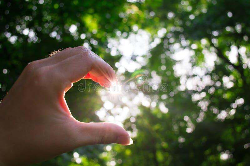 Ręki przyrodni kierowy światło słoneczne obraz stock