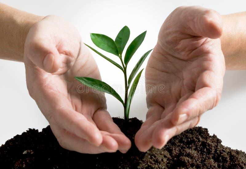 ręki roślina zdjęcie stock