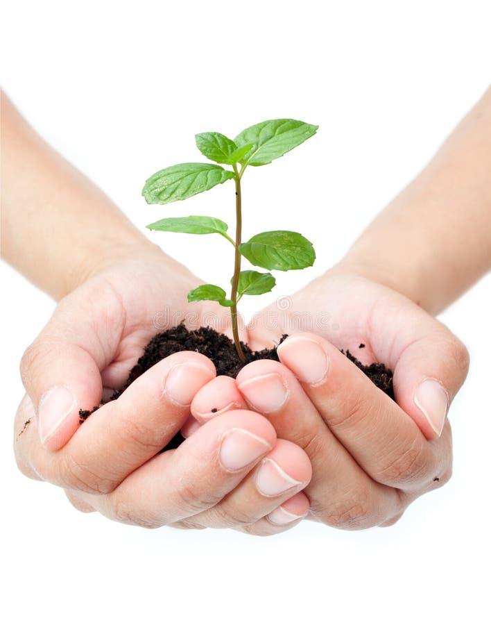 ręki roślina fotografia royalty free