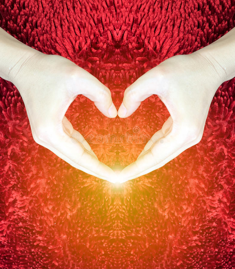 Ręki robi sercu na czerwonym puszystym tle Walentynki ` s dnia pojęcie pocałunek miłości człowieka koncepcja kobieta pokój fotografia stock