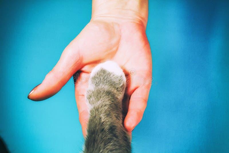 Ręki rodzinna i owłosiona łapa kot jako ekipa Walczący dla prawo zwierząt, pomaga zwierzęta zdjęcie royalty free