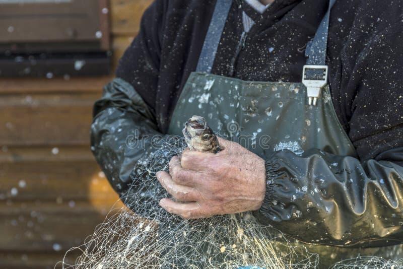 Ręki rybak w Koserow czyści sieć rybacką fotografia royalty free