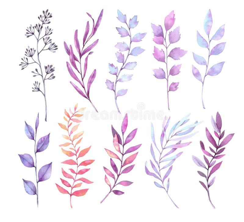 Ręki rysować akwareli ilustracje Botaniczny clipart Set p ilustracji