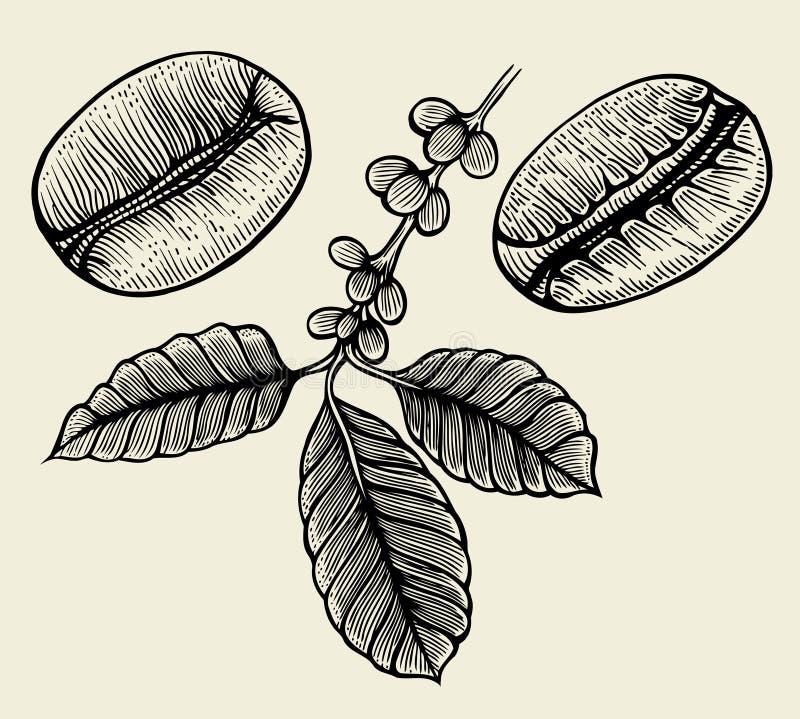 Ręki rysować arabica fasole ilustracja wektor