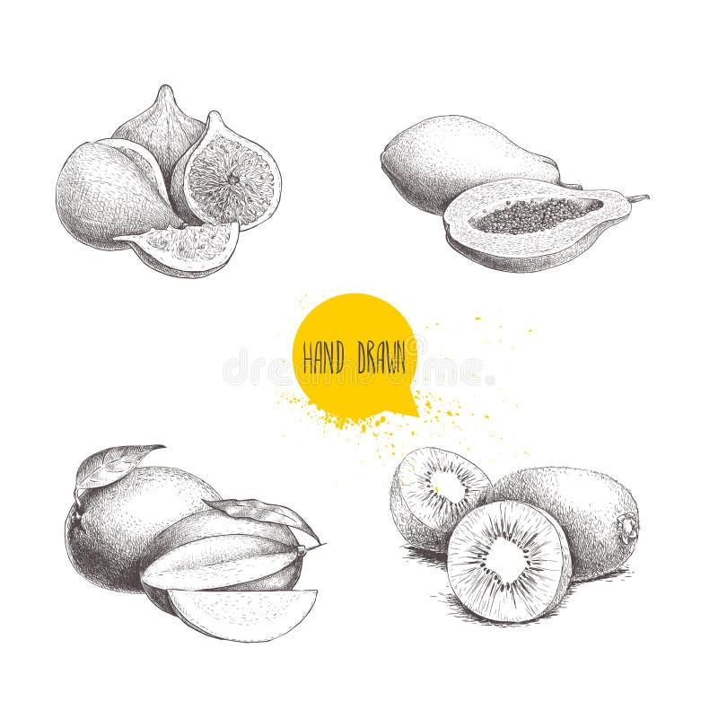 Ręki rysować egzotyczne owoc ustawiać Czupirzy owoc skład, melonowiec, mango i kiwi owoc z cięciem, Eco nakreślenia wektoru karmo royalty ilustracja