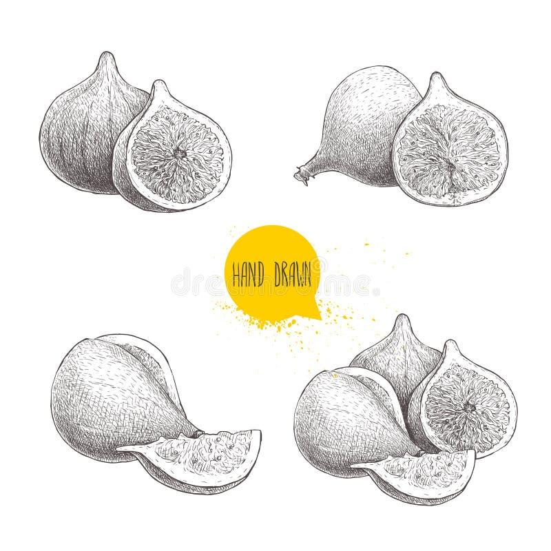 Ręki rysować nakreślenie figi ustawiać Rocznika stylowy owocowy rysunek Eco karmowa wektorowa ilustracja ilustracji