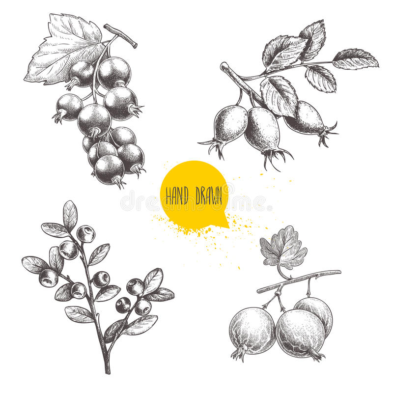 Ręki rysować nakreślenie stylu jagody gałąź ustawiać Czarnej jagody gałąź, różana biodro gałąź, rodzynek i agresty, czarny lub cz ilustracja wektor