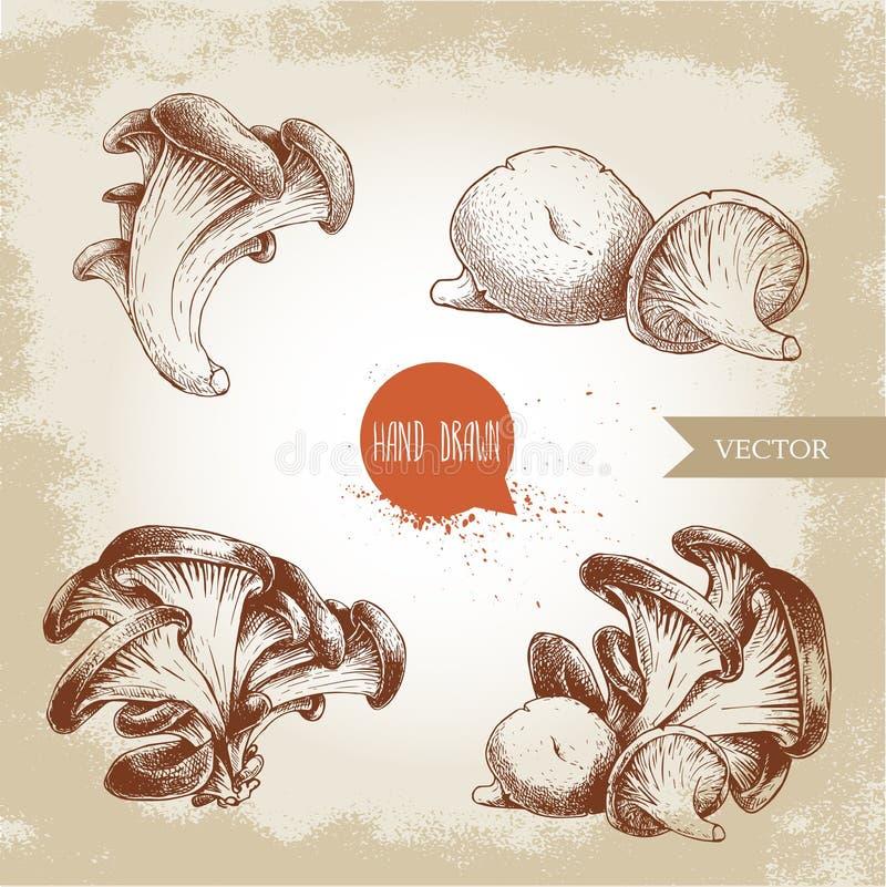 Ręki rysować nakreślenie stylu ostrygowej pieczarki wiązki ustawiać Świeże rolne karmowe wektorowe ilustracje inkasowe royalty ilustracja