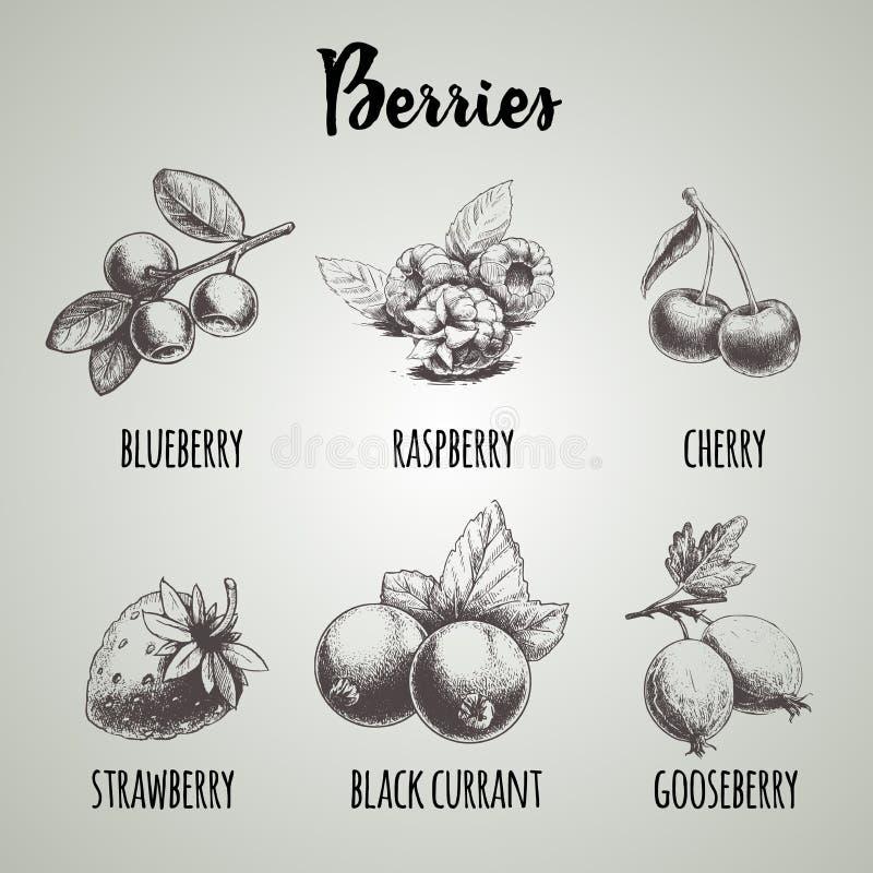 Ręki rysować nakreślenie stylu różne jagody ustawiać Czarna jagoda, malinka, wiśnia, truskawka, czarny rodzynek i agrest, royalty ilustracja