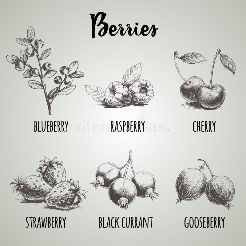 Ręki rysować nakreślenie stylu różne jagody ustawiać Czarnej jagody gałąź, malinki, wiśnia, truskawkowa wiązka, czarni rodzynki i ilustracja wektor