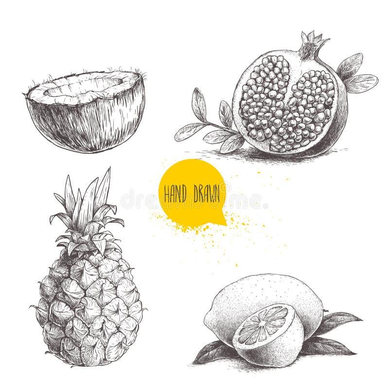Ręki rysować nakreślenie stylu tropikalne owoc ustawiają odosobnionego na białym tle Plasterek cytryna z liściem, połówka koks, a royalty ilustracja