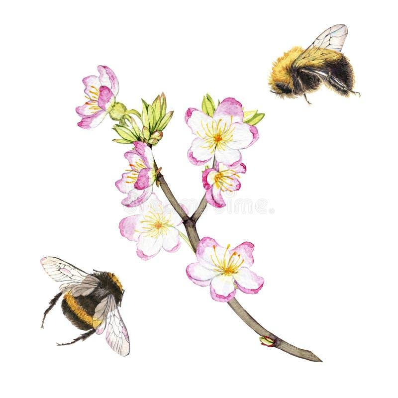 Ręki rysujący akwarela obrazu bumblebees lata wokoło kwitnienia rozgałęziają się ilustracja wektor