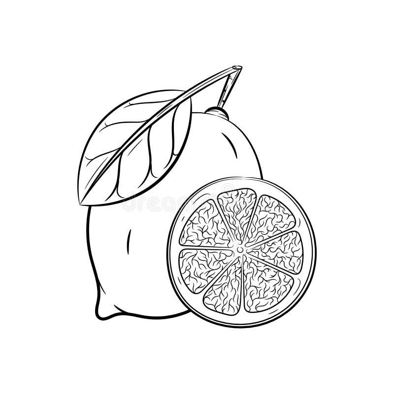 Ręki rysujący cytryn nakreślenia ilustracji