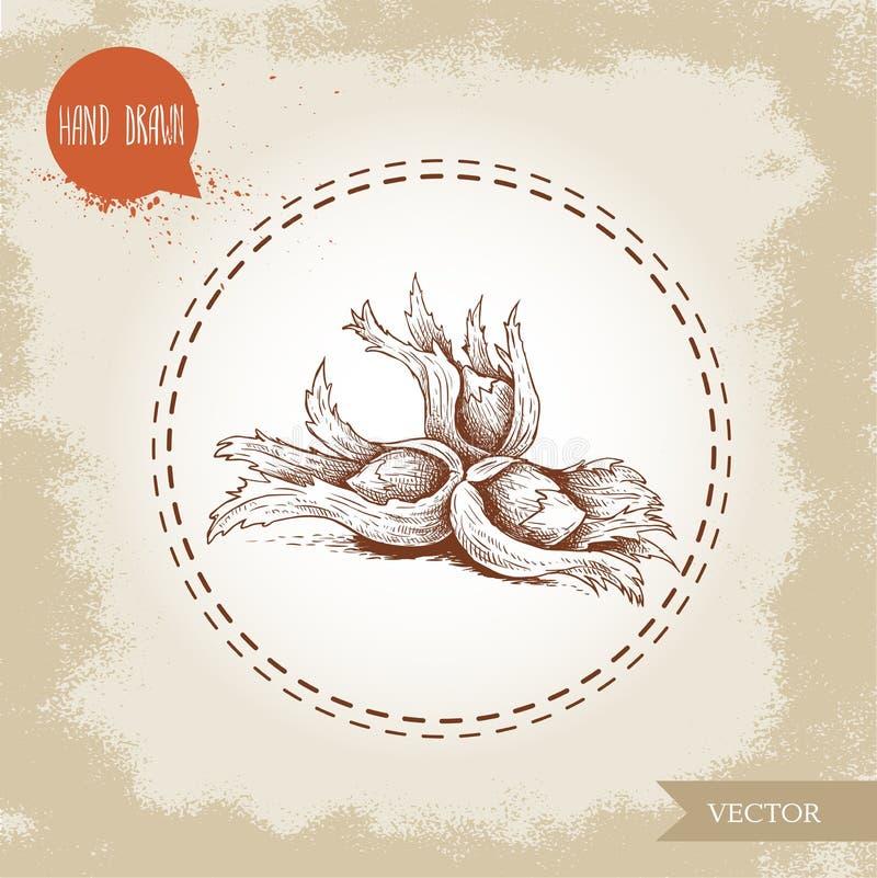 Ręki rysujący nakreślenie stylu hazelnuts w ich gronach Lasowe dokrętki filbert, cobnuts również zwrócić corel ilustracji wektora ilustracji