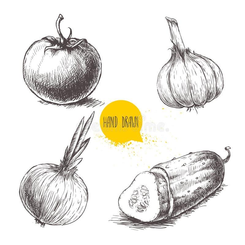 Ręki rysujący nakreślenie stylu warzywa ustawiający Pomidor, cebula, pokrojony ogórek i czosnek, ilustracji