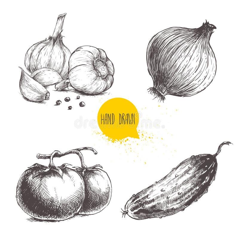 Ręki rysujący nakreślenie stylu warzywa ustawiający Pomidory, cebula, ogórek i garlics z pieprzem, royalty ilustracja