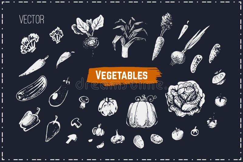 Ręki rysujący warzywa ustawiający Kredowe wektorowe ikony ilustracja wektor