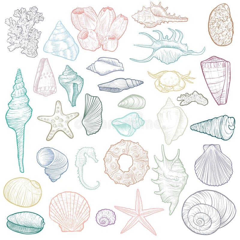Ręki rysujący wektorowi seashells ilustracji