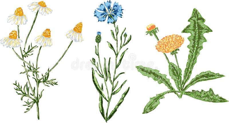 Ręki rysujący wildflowers ilustracji