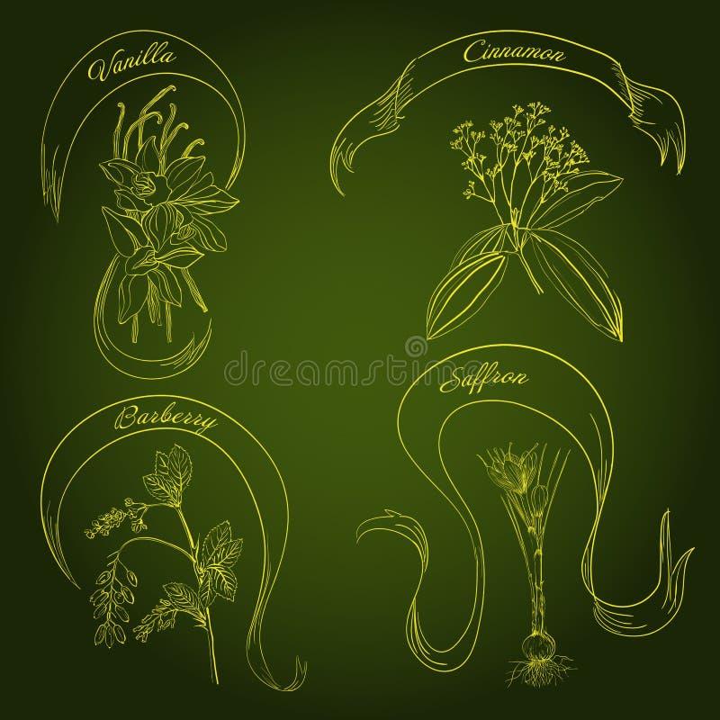 Ręki rysujący ziele royalty ilustracja
