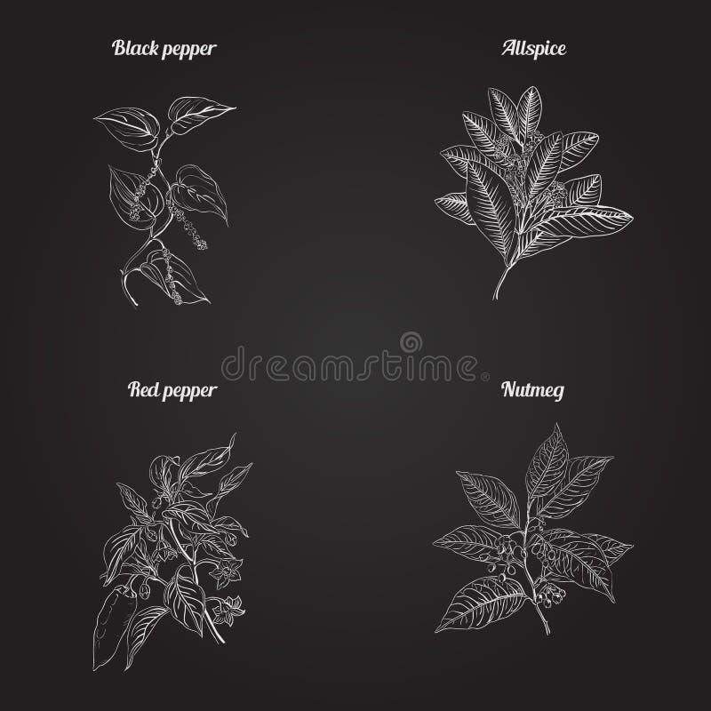 Ręki rysujący ziele ilustracja wektor