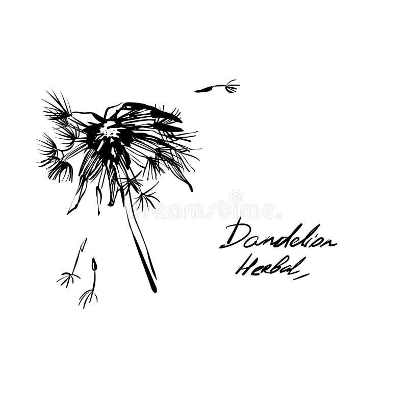 Ręki rysunkowego dandelion ziołowa trawa obraz stock