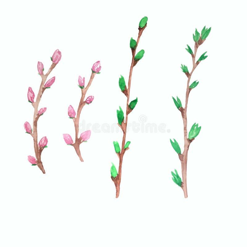 Ręki tonięcia akwareli wiosny gałąź ilustracji