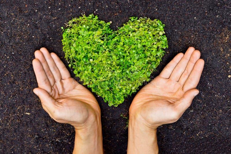 Ręki trzyma zielonego serca kształtnego drzewa fotografia royalty free