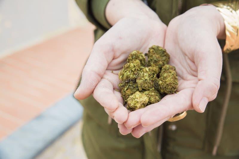 Ręki trzymają mnóstwo marihuana kwiaty zdjęcia stock