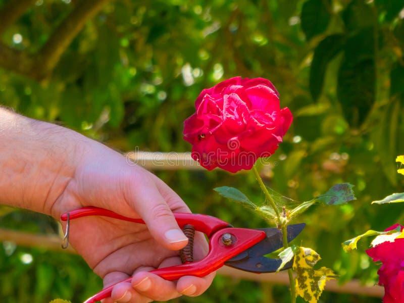 ręki używać w ogródzie strzyżenia zdjęcia stock
