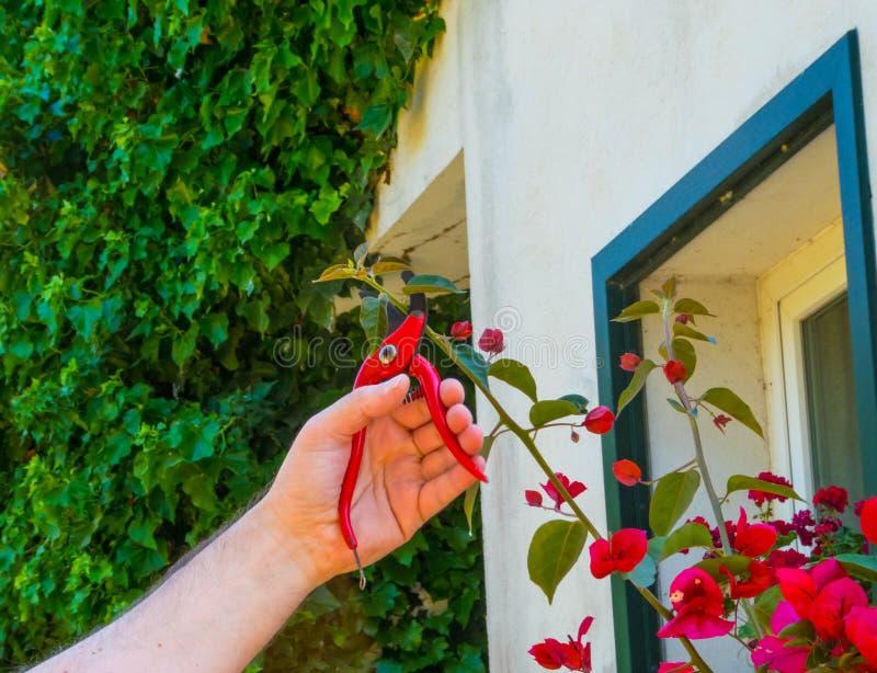 ręki używać w ogródzie strzyżenia fotografia royalty free
