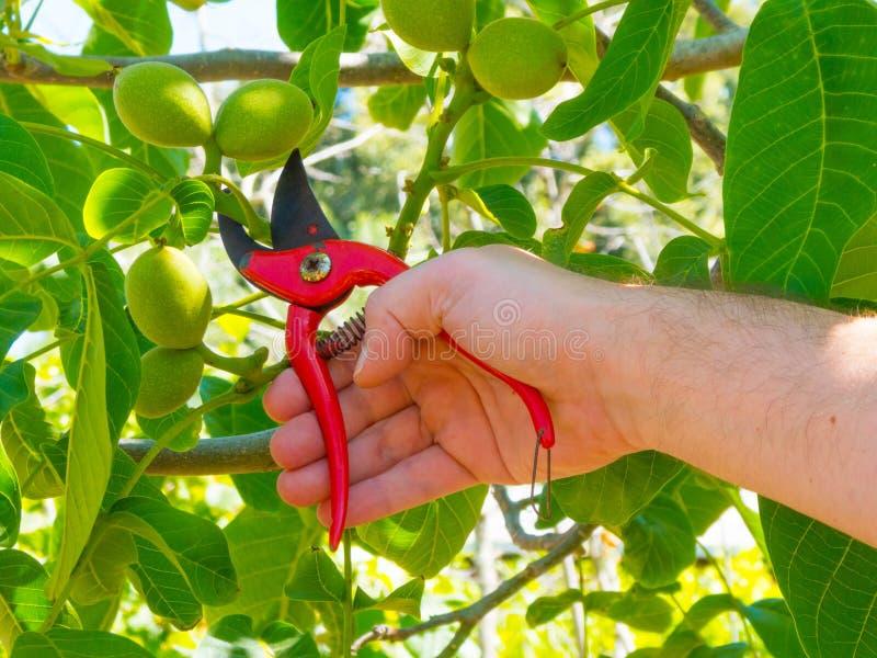 ręki używać w ogródzie strzyżenia zdjęcia royalty free