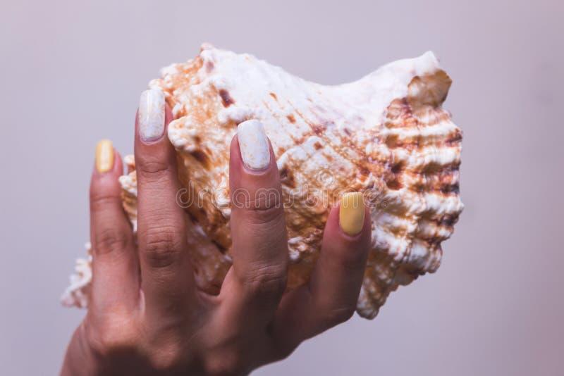 Ręki z pięknymi robiącymi manikiur gwoździami i denną skorupą obrazy stock