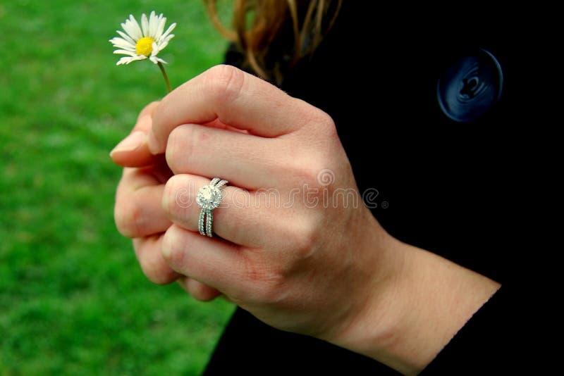 Ręki z pierścionkiem i stokrotką fotografia stock