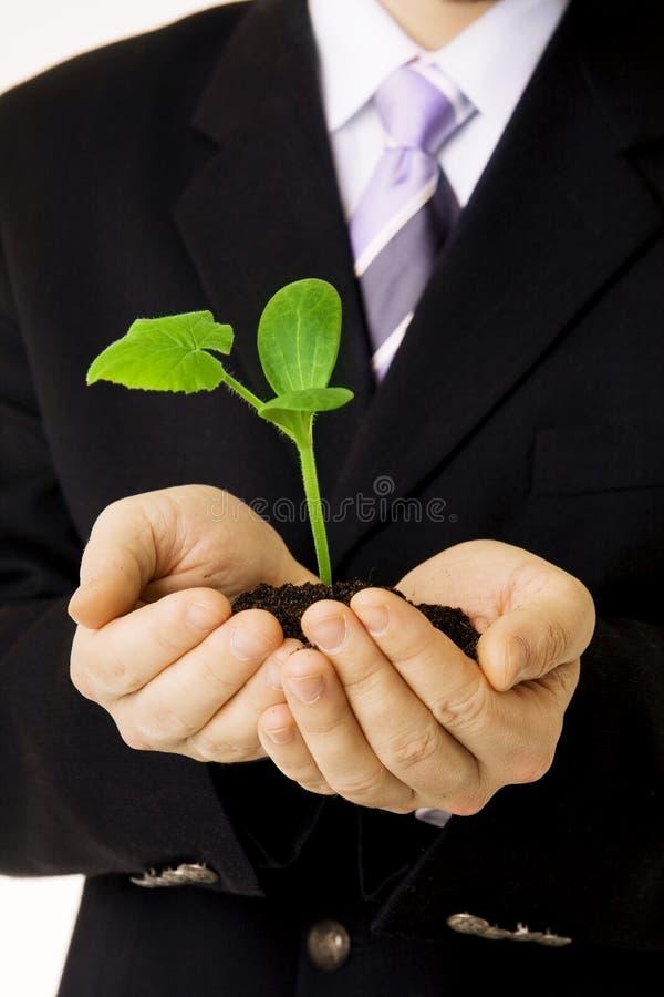 ręki zielona flanca fotografia royalty free