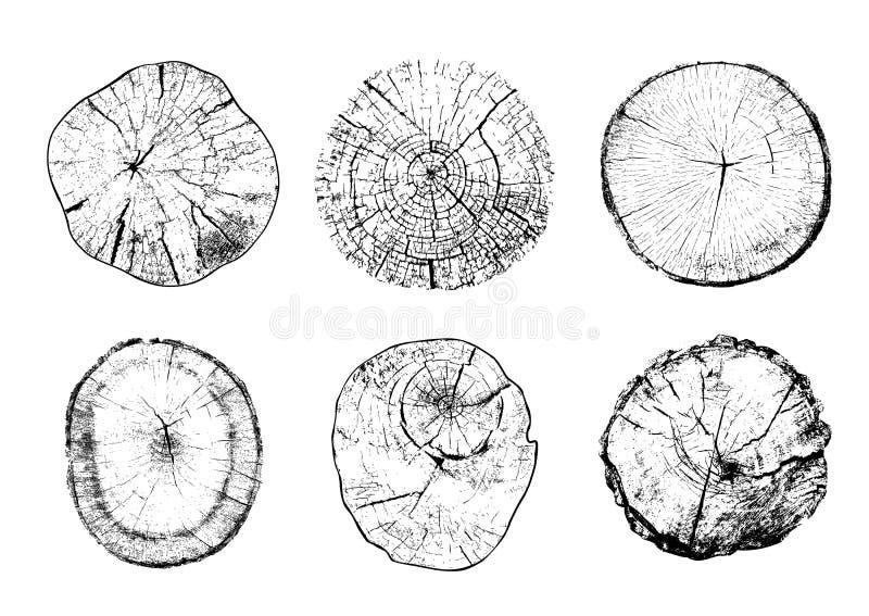 Rżnięci drzewni bagażniki z kółkowymi pierścionkami royalty ilustracja